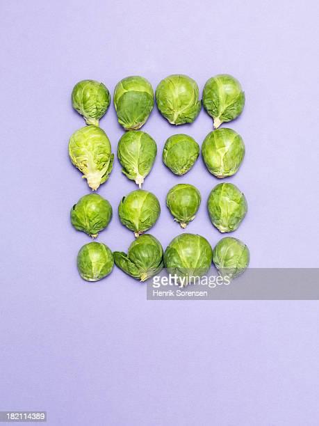 brussels sprouts - stilleven stockfoto's en -beelden