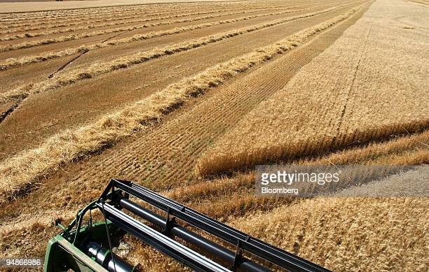 Bryan Mitchell harvests a spring wheat crop in a John Deere combine in a field in Center, Colorado in the San Louis Valley on September 24, 2004.