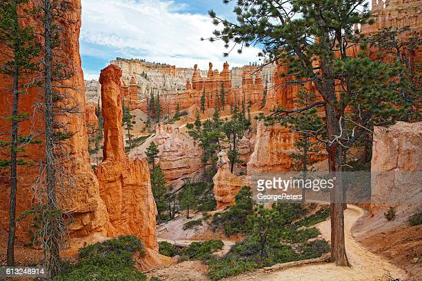 Bryce Canyon Footpath Through The Hoodoos