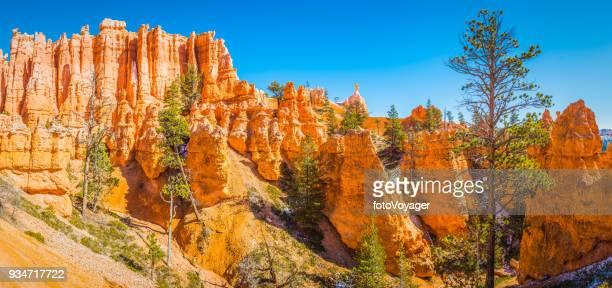 Bryce Canyon National Park golden hoodoos Ponderosa Pines panorama Utah