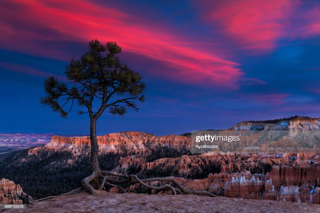 Bryce Canyon National Park  : Stock-Foto