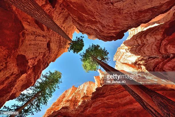 parque nacional de bryce canyon utah - bryce canyon - fotografias e filmes do acervo