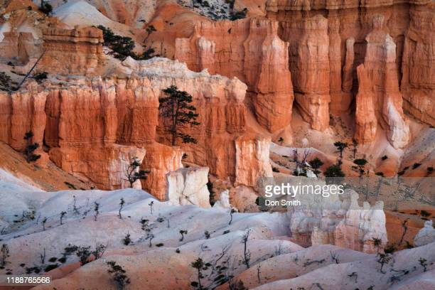 bryce canyon white hoodoos - don smith stock pictures, royalty-free photos & images