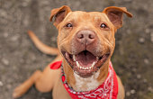 Bubba, a dog photographed for a Northern California animal shelter, finally found his home after spending the better part of a year in a kennel. He is free!
