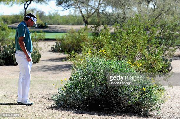 Bubba Watson looks at his ball in a bush before he plays a drop on the 13th hole during the third round of the Waste Management Phoenix Open at TPC...