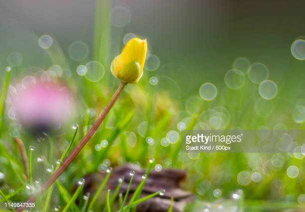 bubble bokeh fever - stadt stock pictures, royalty-free photos & images