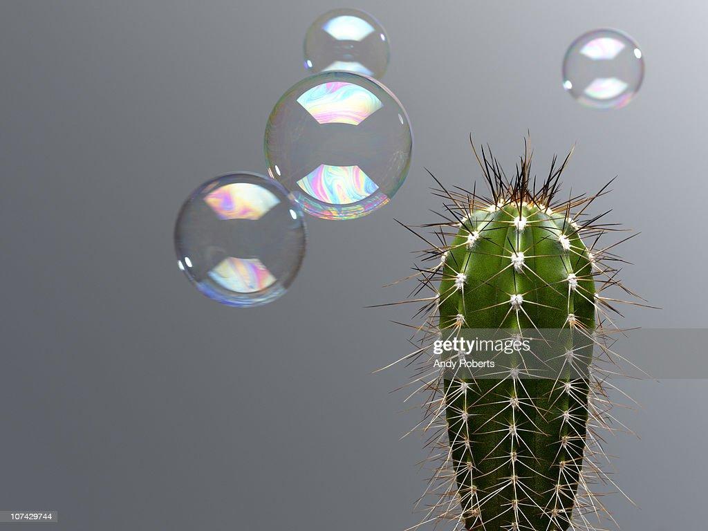 Bubble floating near spiny cactus : Stock Photo
