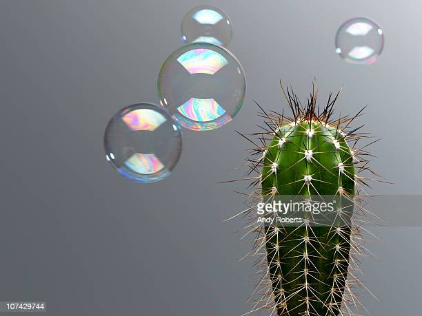 bubble floating near spiny cactus - hazard stock pictures, royalty-free photos & images