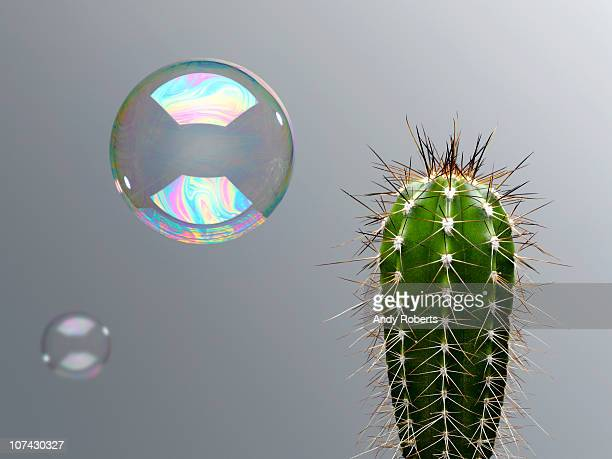 bubble floating near spiny cactus - protection stock pictures, royalty-free photos & images