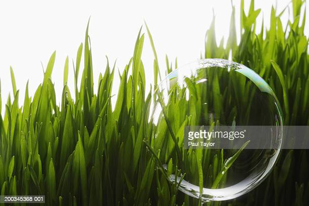 Bubble with grass in background