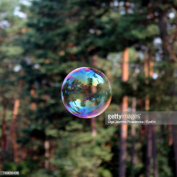 Bubbles In Rainbow Over Trees