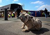 london england bubbles french bulldog enjoys