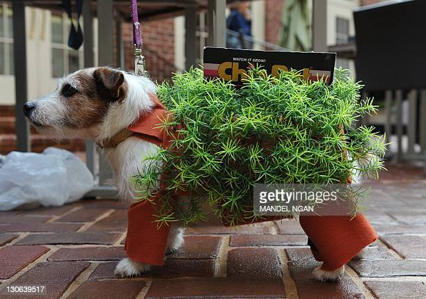 Chia Pet Stock Pictures Royalty Free