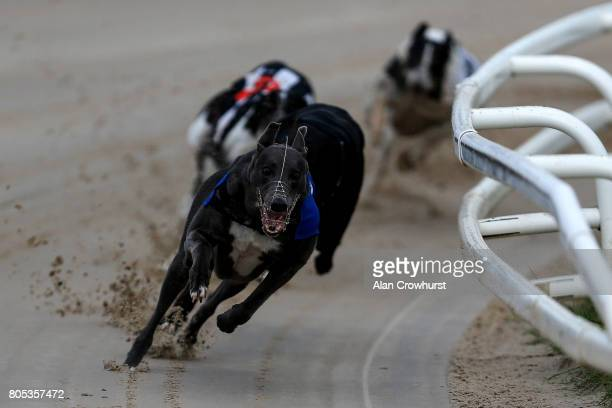 Bubbly Biuebird win The Star Sports AngloIrish Invitation at Towcester greyhound track on July 1 2017 in Towcester England