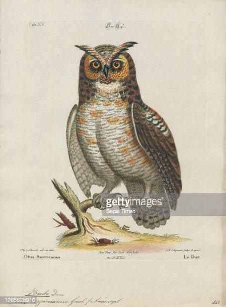 Bubo virginianus. Print. The great horned owl . Also known as the tiger owl or the hoot owl. Is a large owl native to the Americas. It is an...