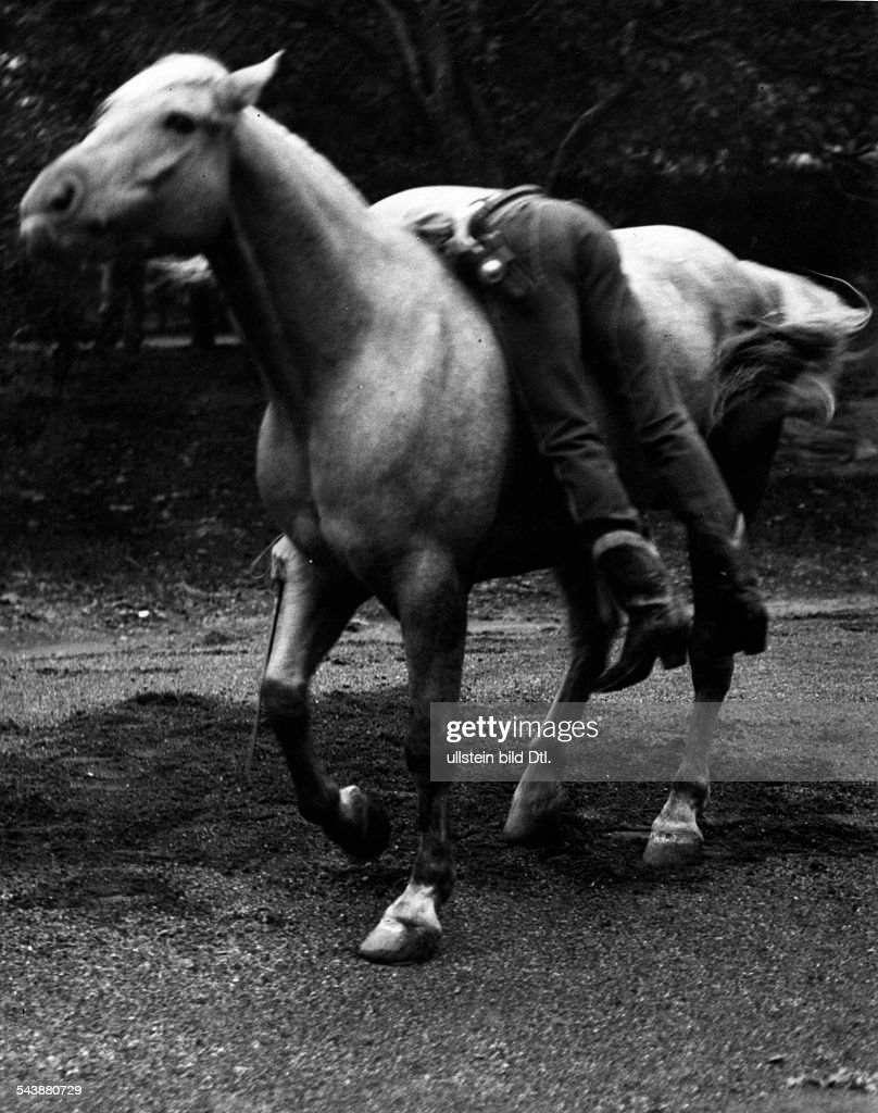 Buck The Magical Horse Of New York Animal Training The Horse News Photo Getty Images