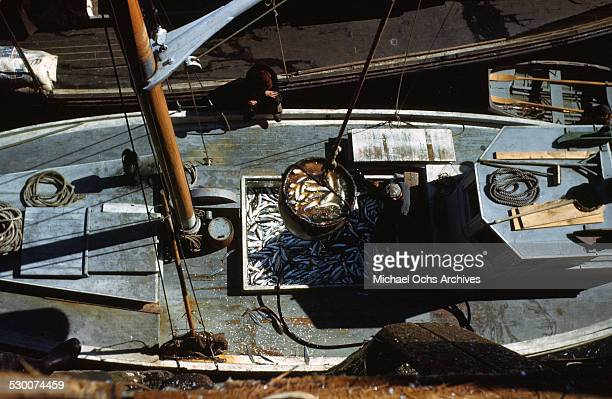 A bucket full of sardines is hauled off the boat in Lubec Maine