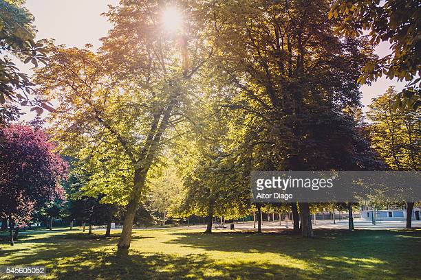 buckeyes trees in backlight. park in summer time.madrid, spain. - picture of a buckeye tree stock photos and pictures