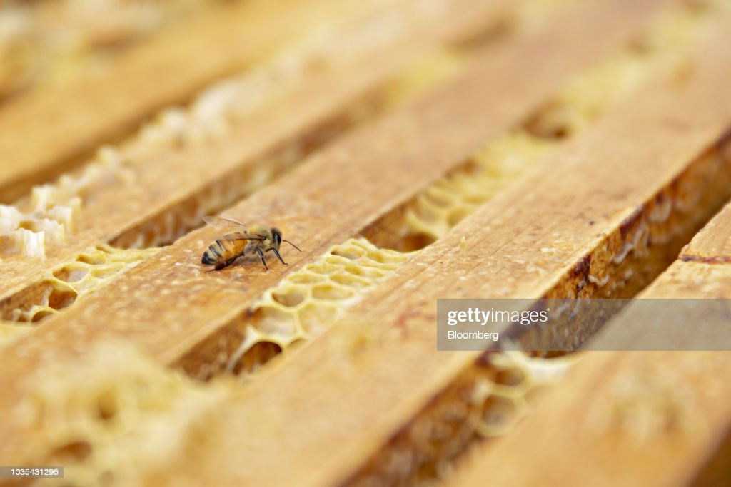 Honey Collection As Climate Change May Affect Honeybees