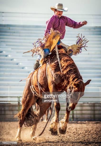 bucking ação bronco - estadio de los cowboys - fotografias e filmes do acervo