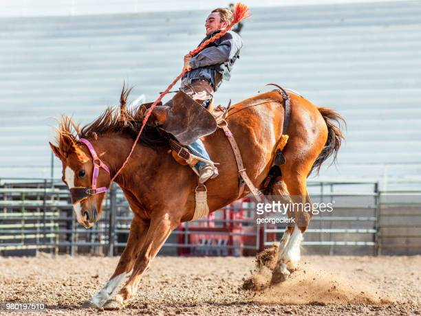 bucking bronco action - bucking stock photos and pictures
