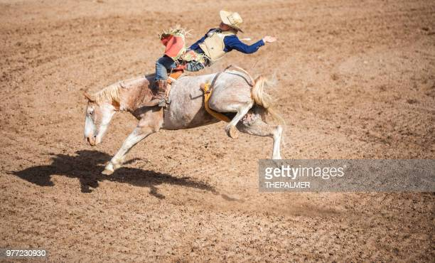 bucking bronco cowboy - bucking stock photos and pictures