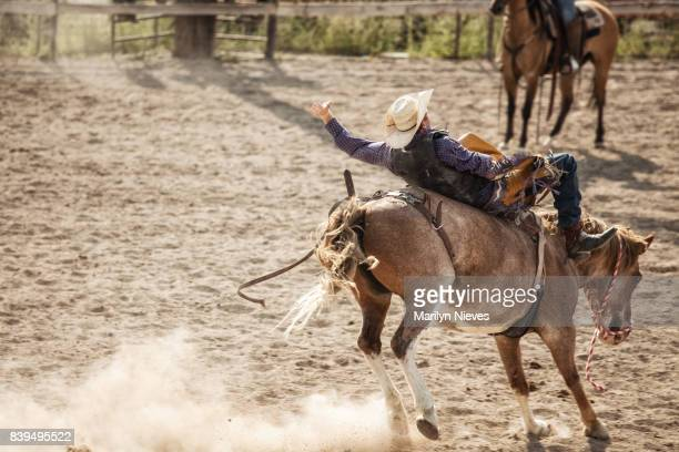 bucking bronco - bucking stock photos and pictures