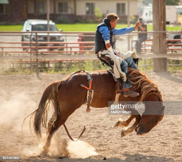 bucking horse competition