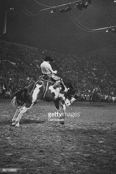Bucking horse contest in rodeo during the National Western Stock show
