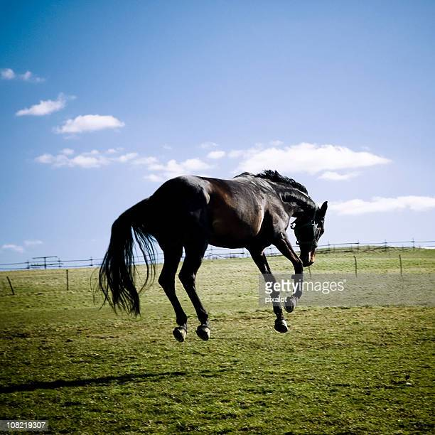 bucking horse in pasture - bucking stock photos and pictures