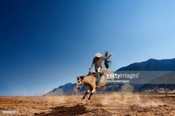 bucking horse - horse stock pictures, royalty-free photos & images