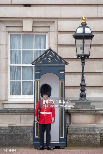 buckingham palace guard, london, great britain. - honor guard stock pictures, royalty-free photos & images