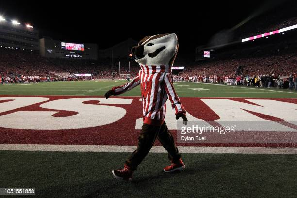 Bucky Badger the mascot of the Wisconsin Badgers walks across the field during the game against the Nebraska Cornhuskers at Camp Randall Stadium on...
