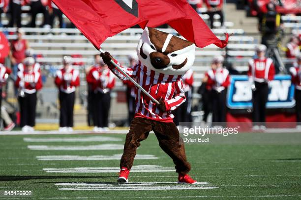 Bucky Badger the Wisconsin Badgers mascot waves a flag before the game between the Wisconsin Badgers and the Florida Atlantic Owls at Camp Randall...