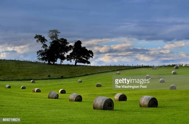 A bucolic scene in Southwest Virginia features perfect hay rolls and fresh cut grass A Washington PostKaiser Family Foundation survey found that...