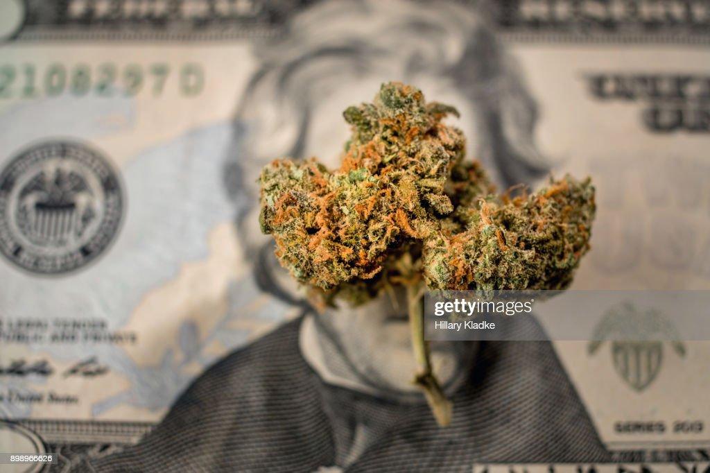 A bud of marijuana on $20 : Stock Photo