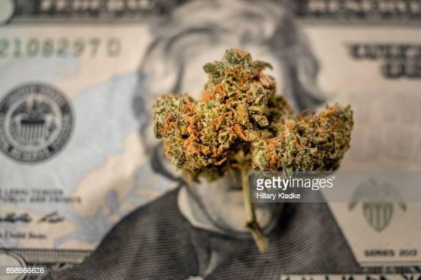 a bud of marijuana on $20 - marijuana money stock photos and pictures