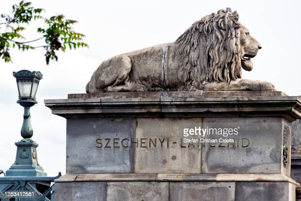 budapest chain bridge lion's - budapest, hungary - hungary stock pictures, royalty-free photos & images
