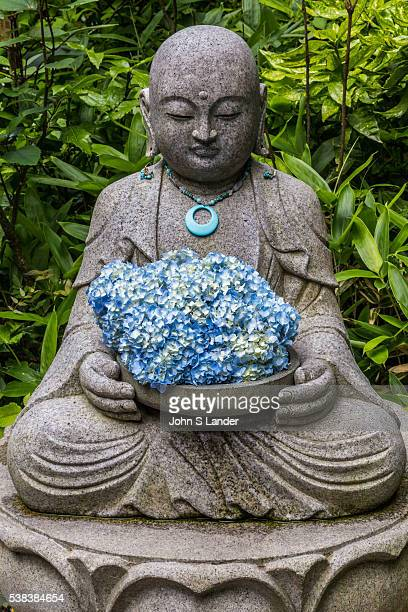 Buddha and Hydrangea at Meigetsuin Meigetsuin also known as Ajisaidera or Hydrangea Temple since many Hime Ajisai Princess Hydrangea are planted on...