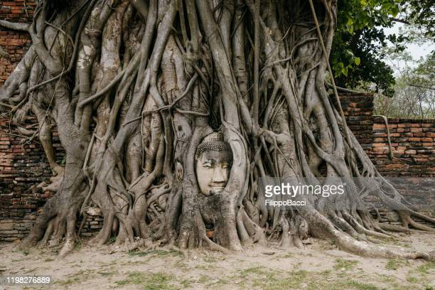 buddha face in the root of a tree - ayutthaya, thailand - spirituality stock pictures, royalty-free photos & images