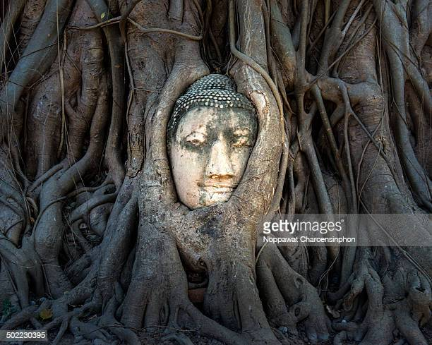 CONTENT] Buddha Head at Wat Mahathat UNESCO World Heritage Site