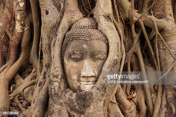 Buddha Head in Tree Roots at the Entrace of Ayutthaya Wat Mahathat