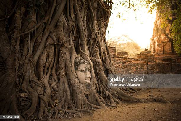 Buddha Head in Tree Roots in Wat Mahathat Ayutthaya. If you are travelling in Thailand for any length of time there is one iconic image that you may...