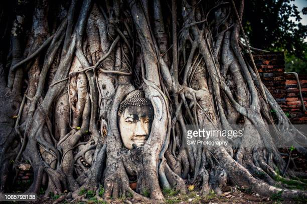 buddha head in tree roots, wat mahathat, ayutthaya - ayuthaya province stock pictures, royalty-free photos & images