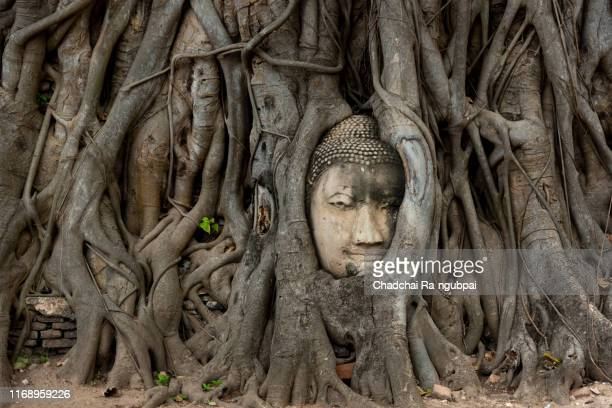 buddha head in tree roots wat mahathat temple ayutthaya province thailand. - ayuthaya province stock pictures, royalty-free photos & images