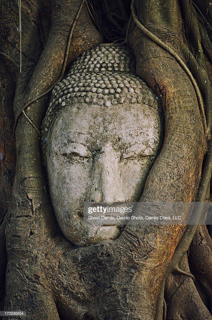 Buddha head : Stock Photo