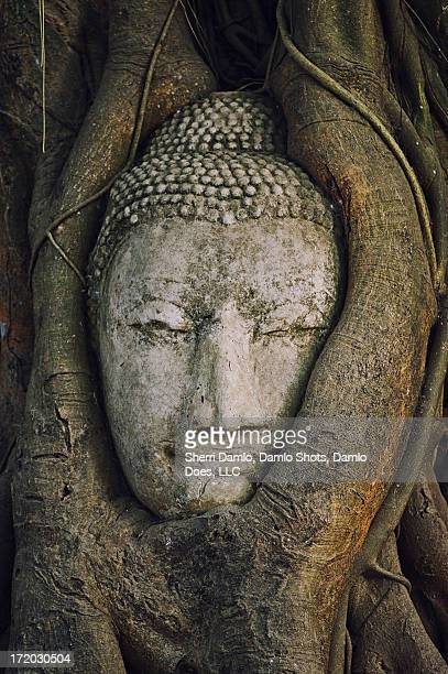buddha head - damlo does stock pictures, royalty-free photos & images