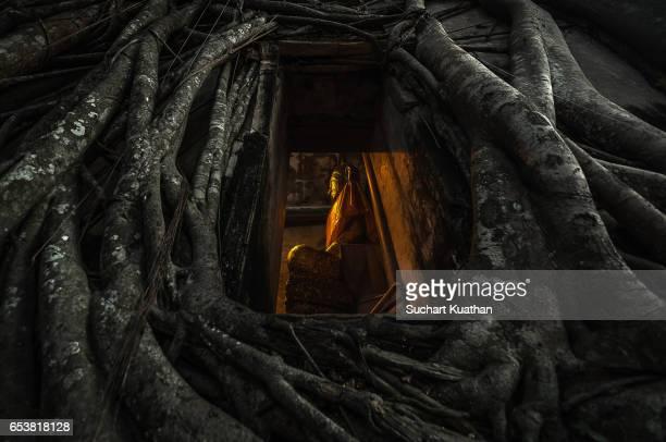 buddha in the tree root - ruina antigua fotografías e imágenes de stock