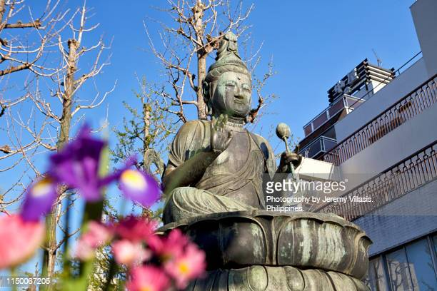 buddha - jeremy chan stock pictures, royalty-free photos & images