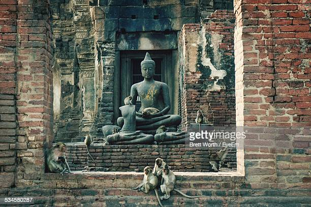Buddha Statue In Damaged House